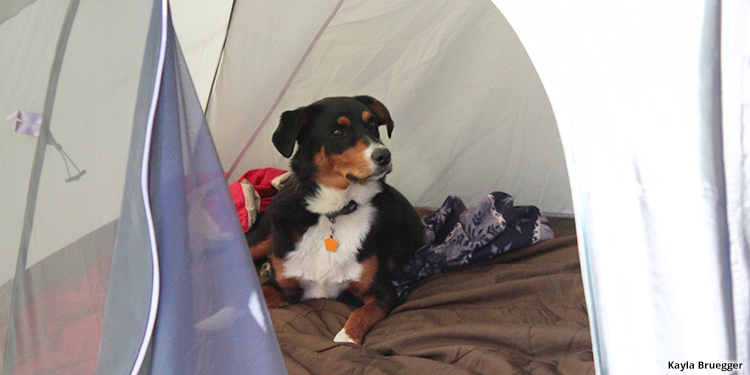 Dog Camping in Colorado