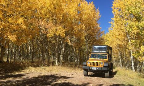 Fall foliage on the Gold Belt jeep to in Cripple Creek, Colorado.