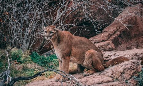 Colorado Wildlife and Where to Find Them