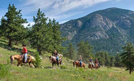 SK Horses