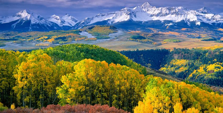 Colorado Aspen Trees in the Fall with snow on the mountains