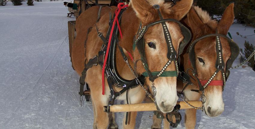 sleigh-ride-tours