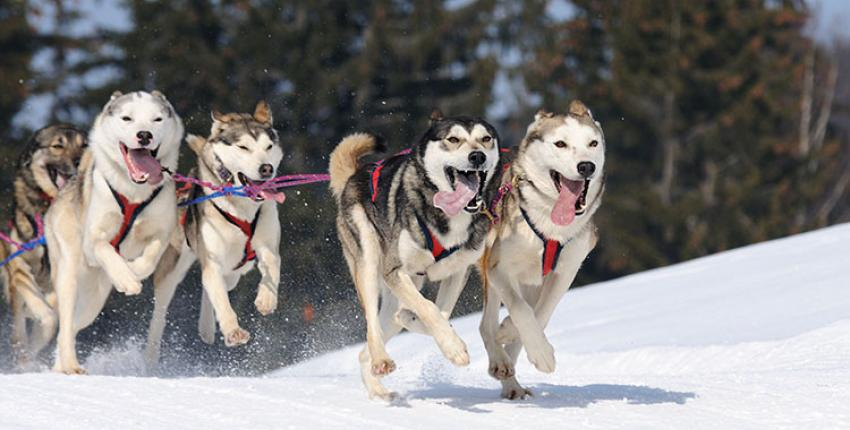 colorado-dog-sled-winter-huskies